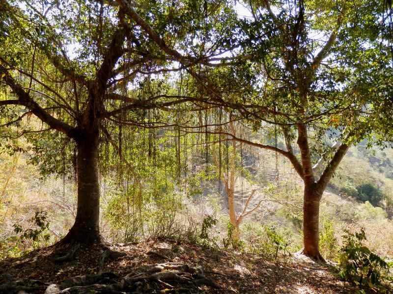 Pédagogie nature